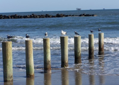 What's better than taking a picture of a Seagull on a post? A Seagull on every post...